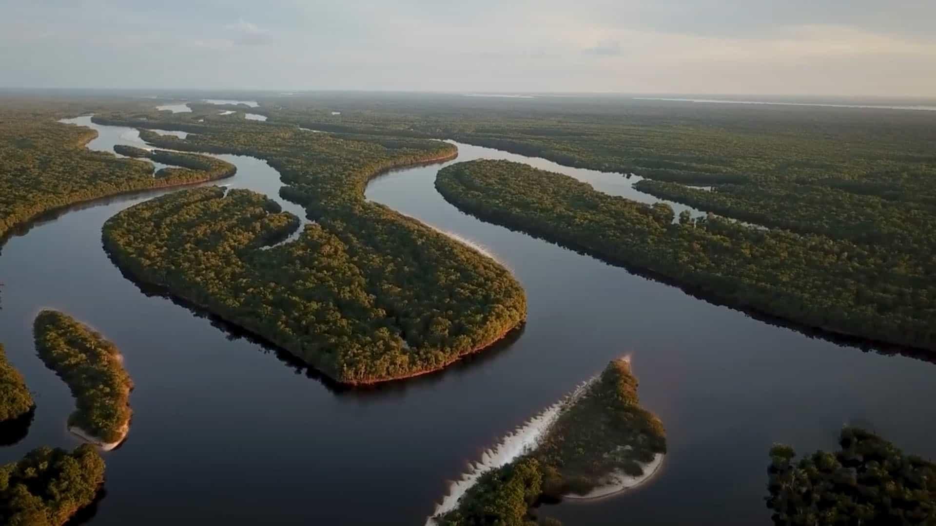 Exklusives Video: Wild Gefangen – Der Zierfischhandel am Amazonas 1