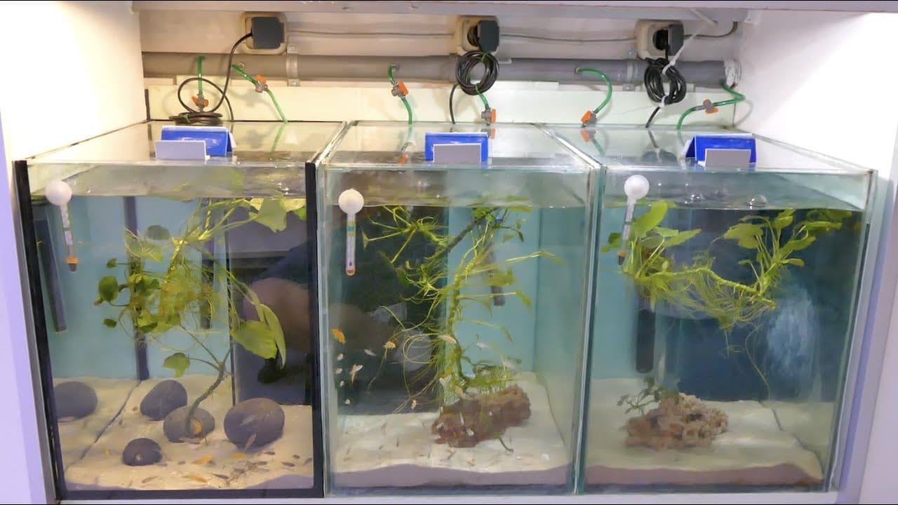 Tobis Aquaristikexzesse Video Tipp:  Mein Aquarium ist undicht