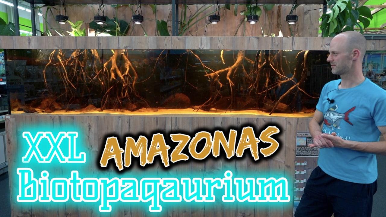 AQUaddicted! - Video Tipp: 3 Meter XXL Amazonas Biotop-Aquarium