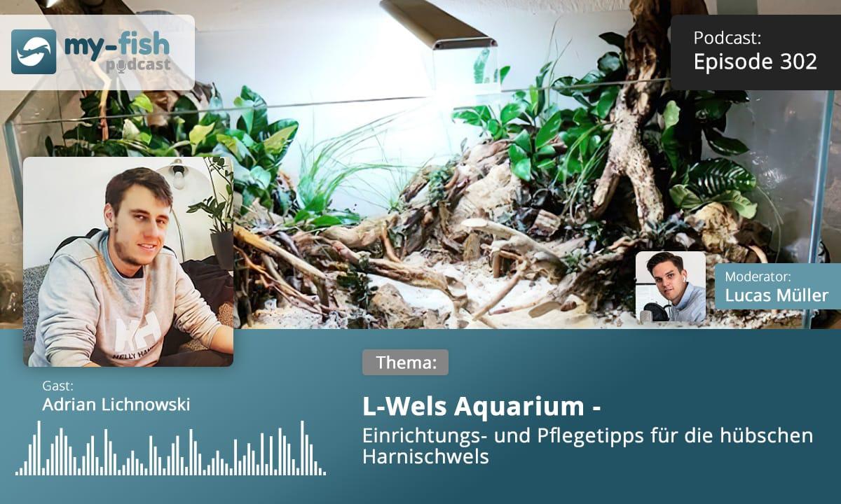 Podcast Episode #302: L-Wels Aquarium - Einrichtungs- und Pflegetipps für die hübschen Harnischwelse (Adrian Lichnowski)